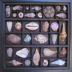 Sea shell wall art assemblage with colorful shells composed in a dark letterpress box.