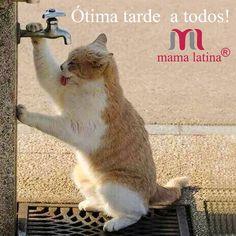 Olá pessoal! ☁☁ Que dia liiiiindo hoje!  Dia perfeito para ser O dia perfeito não acham? A equipe Mama Latina deseja uma ótima terça-feira a todos! E que você não deixe de cuidar de sua saúde um minuto em  Beeeeeijos  #boatarde #boaterça #mamalatina #modafeminina #modapilates #ecommercebrasil #ecommercedemoda #compras #comprasegura #compraonline #gym #legging #academia #Fitness #mulheresquetreinam #treino #legday #absday #projeto