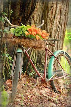 Vintage bicycle - green fenders - basket full of orange tulips. Bicycle Basket, Old Bicycle, Bicycle Art, Old Bikes, Bike Baskets, Bicycle Decor, Bike Planter, Vintage Bicycles, Orange Flowers