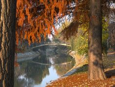 Herbst - Begakanal, Brücke zwischen den Parks, Temeswar Romania, Parks, Wanderlust, Painting, Travel, Pictures, Autumn, Viajes, Painting Art