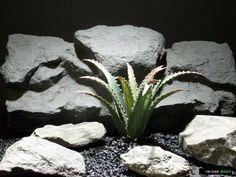 reptile enclosure lizard tank plant: agave succulent | ron beck designs | www.ronbeckdesigns.com  #ron_beck_designs