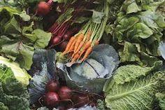vegetable garden beauty - Google Search