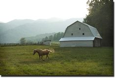 green, horse, barn