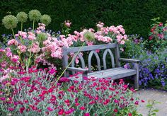 "Tranquil resting spot surrounded with fragrance color and beauty - English rose 'Scepter'd Isle', Lychnis Coronaria in the foreground, allium 'Purple Sensation, and geranium ""Rozanne'"