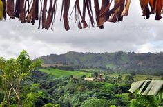Jungle at Dominicana