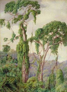 Yellow-Wood Trees and Creepers in the Perie Bush by Marianne North; c. 1882; Oil on board; Collection: Royal Botanic Gardens, Kew, England