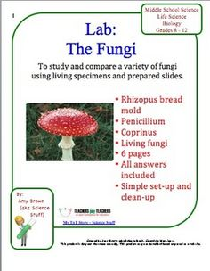 fungi quiz worksheet review worksheets. Black Bedroom Furniture Sets. Home Design Ideas