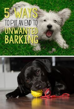 It's difficult to get a dog to stop barking, particularly if they are bored and…