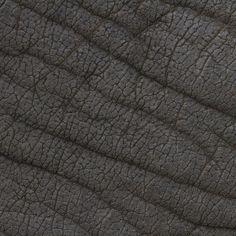 La texture des animaux texture peau poil plume animal 01 800x800