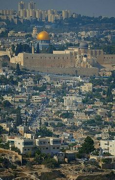فلسطين..