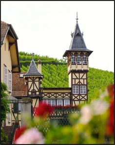 Alsace - Maison Trimbach #Alsace Alsace, Travel Around The World, Around The Worlds, French Wine, Tasting Room, Travel Abroad, Places To Travel, Vineyard, Fresh Prince