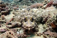 Animals That Are Camouflaged | Camouflaged animals playing hide-and-seek by blending into the ...