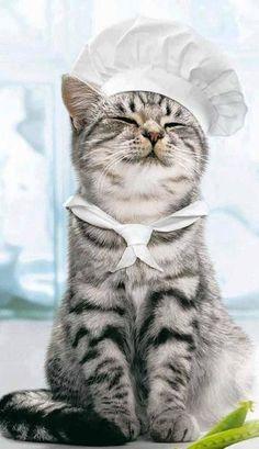 Aşçı kedi:)