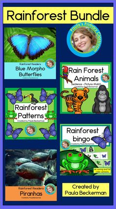 Rainforest Bundle with Patterns, Guided Reading and Bingo Game Morpho Butterfly, Blue Morpho, Teaching Main Idea, Teaching Ideas, Teaching Resources, Science Lessons, Science Activities, Rainforest Classroom