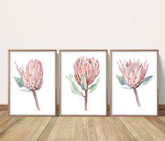 Set of 3 Protea Watercolor Paintings, Protea Prints, Blush Pink Wall Art, Bedroo. Set of 3 Protea Protea Art, Protea Flower, Floral Flowers, Pink Wall Art, Nursery Wall Art, Bedroom Wall, Watercolor Bird, Watercolor Paintings, Pink Prints