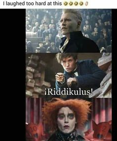 Here are some of the freshest Harry Potter memes and pictures from different series of Harry Potter movies. For all Potterheads enjoy this list of memes by Swishtoday. Harry Potter Tumblr, Harry Potter World, Mundo Harry Potter, Harry Potter Puns, Harry Potter Pictures, Harry Potter Universal, Desenhos Harry Potter, Harry Potter Wallpaper, Funny Memes