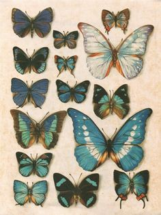 How To Create Printables and Printable Artwork For Your Home + A Freebie! - Angie Makes - Pillipi lol Vintage Butterfly, Butterfly Art, Butterfly Images, Art Papillon, Fun Diy Crafts, Butterfly Wallpaper, Beautiful Butterflies, Clipart, Wall Collage