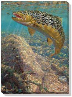 Brown Trout Wrapped Canvas by M. Susinno