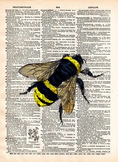 Bumblebee art print, Illustration of a Bumblebee from a mid 1800's science journal, brought to life for your viewing pleasure. (its not literally alive....) These unique and original artwork are print