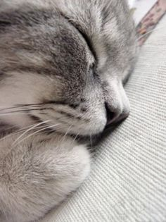 Sleeping Cat...so Peaceful! - Click for More...