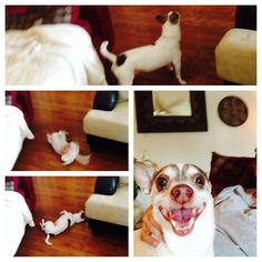 Wishbone, you are so silly. Submitted by sitter Ruth.