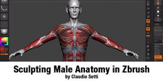 Sculpting Male Anatomy in Zbrush by Claudio Setti