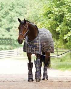 Tips for taking horse pictures. On a side note, the blanket and shipping boots are beautiful:)