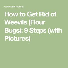 How to Get Rid of Weevils (Flour Bugs): 9 Steps (with Pictures)