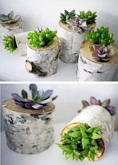 birch succulent planters by crown flora studio