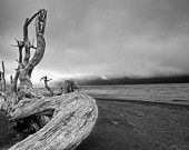 Driftwood, Vancouver Island, Pacific Northwest, British Columbia - a Black and White Photograph