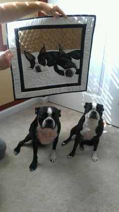 Boston Terriers...want this quilt