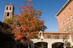 Fall at St. Catherine University, St. Paul, MN. (Photo by Rebecca Zenefski '10)