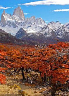 Cerro Chalté, Santa Cruz, Patagonia, Argentina. Lengas en otoño.