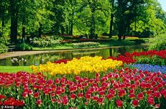 Set sail to take in Holland's truly glorious tulips Beautiful Flowers Garden, Flowers Nature, Holland Cruise, Rivers Of Living Water, Spring Landscape, Bulb Flowers, Set Sail, Trees To Plant, Botanical Gardens