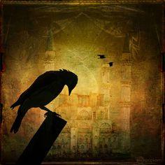 dream of the black bird 4 And 20 Blackbirds, Virgo, Sunken Eyes, Jackdaw, Wood Mosaic, Crows Ravens, All Birds, Tag Photo, Bird Art