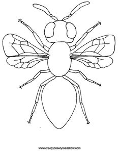 The Creepy Crawlies Show Colouring Pages