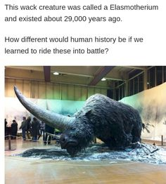 How would a human ride it because it's bigger than it looks, also the fact that they would still go extinct because of rising temperature and we would just start riding normal rhinos Funny Memes, Hilarious, Animal Facts, Prehistoric Animals, Wtf Fun Facts, The More You Know, Interesting History, Extinct, Fantastic Beasts