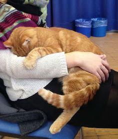 """O Grito do Bicho"": Felino vai a universidade todos os dias para dar r..."