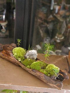 mini wild indoor garden art