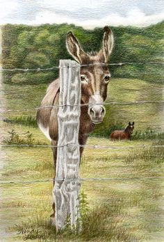 Well Hidden -a color pencil drawing from artist Wendy Leedy's donkey collection- fine art print, signed
