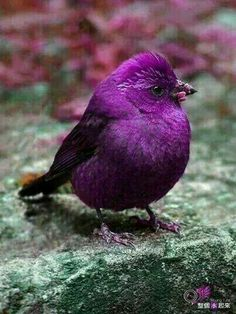 Adorable Purple Bird