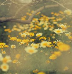 Meadow of buttercups. Image Nature, All Nature, Wild Flowers, Beautiful Flowers, Beautiful Places, Yellow Flowers, Happy Flowers, Spring Flowers, Daisy Field