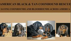 (US): American Black & Tan Coonhound Rescue http://www.coonhoundrescue.com/CONTACTS.html