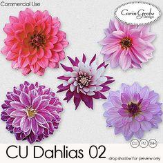 Digital Art :: Element Packs :: Dahlias 02