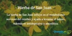 """La #hierba de San Juan influye en el metabolismo nervioso del cerebro y ayuda a levantar el ánimo. Se ha demostrado su influencia en los mensajeros químicos del metabolismo cerebral y el aumento de la """"absorción o uso interno de la luz solar"""". #salud #hiernas #plantas #natural"""