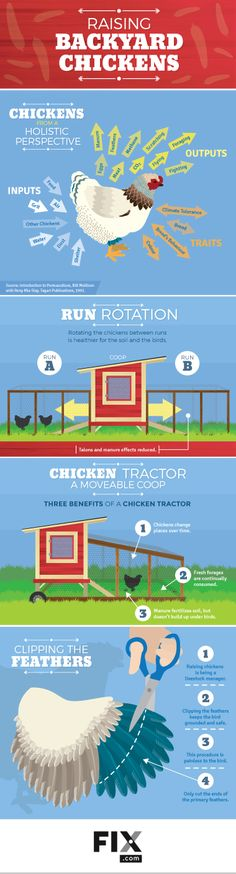 Chickens are a great addition to any backyard garden experience. We cover some simple coop ideas and management concepts