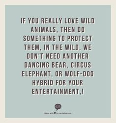 """Say no to """"entertainment"""" involving animals! That means animal circuses (Cirque du Soleil and others that just have human performers are fine), rodeos, dog/horse/any other animal racing, bullfights, zoos, aquariums,etc."""