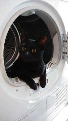 Black cat with Golden eyes doing the laundry… Schwarze Katze mit goldenen Augen beim Waschen … Cute Funny Animals, Cute Baby Animals, Funny Cats, Pretty Cats, Beautiful Cats, Crazy Cat Lady, Crazy Cats, Photo Chat, Cat Memes