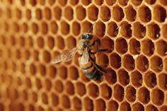 What is honey and why do bees make it?