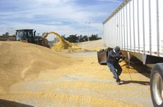 Corn Hopper Bottom for corn pile grows as feedyard
